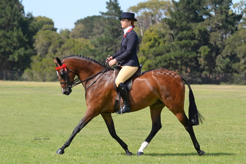 pony club tasmania handbook