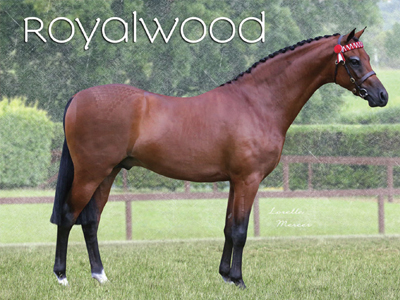 royalwood2