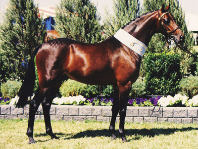 stallion13