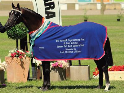 stallion15