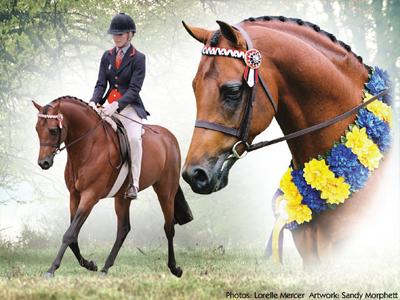 stallion18