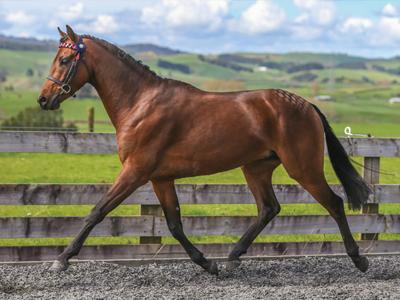 stallion23
